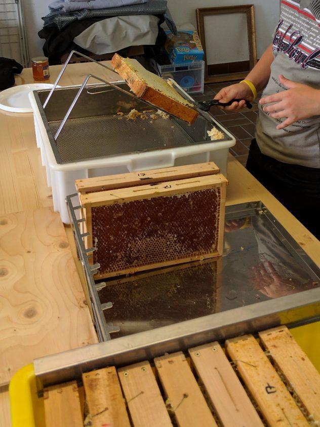 Honigernte: Honigwaben entdeckeln